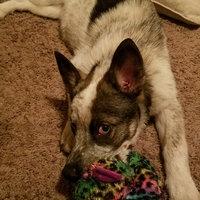 Purina Puppy Chow Healthy Morsels Dog Food Bonus Size 36 lb. Bag uploaded by Hanna C.