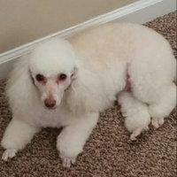 Pedigree® DentaStix™ Deep Clean Dog Treat uploaded by Veronica W.