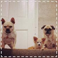 United Pet Group 26010 Dingo Dental Munchy Sticks, 10 Count uploaded by Tina G.