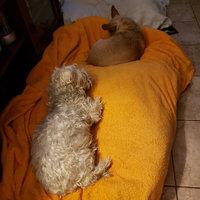 Hartz Mountain 97928 Groomer's Best Oatmeal Dog Shampoo uploaded by Rayshelle R.