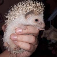 Super Pet Comfort Wheel for Hamster/Gerbil/Hedgehog - Large uploaded by Anastasia J.