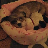 Pedigree® DentaStix™ Deep Clean Dog Treat uploaded by Rachel Y.