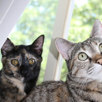 World's Best Multiple Cat Clumping Cat Litter uploaded by Sarah S.