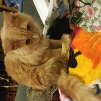 Purina® DentaLife Chicken Dental Cat Treats uploaded by Brittany M.