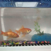 Tetra TetraFin Goldfish Flakes uploaded by Konstantina R.