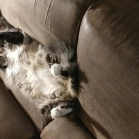 Pets N People 3in1 Odor Destro uploaded by Amy S.