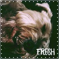 CESAR® Dry Filet Mignon Flavor with Spring Vegetables - Dry Dog Food uploaded by elibeth v.