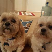 Pup-peroni Pup-Peroni Lean Beef Dog Treats (10 oz.) uploaded by Tina W.