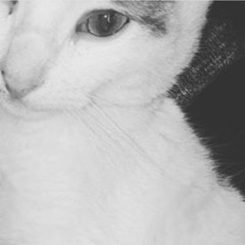 Photo uploaded to #FurryFriends by miss_algeriina w.