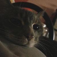 Friskies® Party Mix Beachside Crunch Cat Treats uploaded by Jesa L.