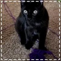 Friskies® Party Mix Cat Treat uploaded by Ashley M.