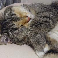 TEMPTATIONS™ MixUps Treats For Cats Catnip Fever Cat Treats uploaded by Marina D.