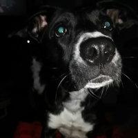 Beggin'®  Strips® Bacon & Cheese Flavors Dog Treats uploaded by Elisha B.