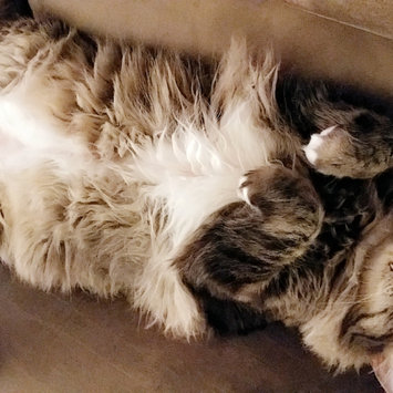 Photo uploaded to #FurryFriends by Amy S.
