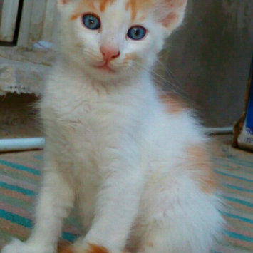 Photo uploaded to #FurryFriends by Manar A.