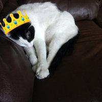Friskies® Party Mix Cheezy Craze Crunch Cat Treats uploaded by Heidi W.