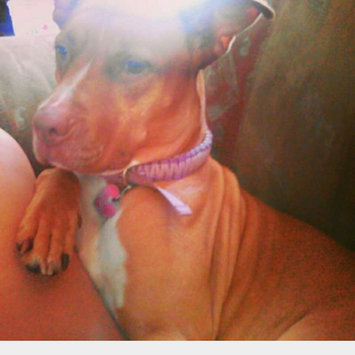Photo uploaded to #FurryFriends by GABRIELLE G.