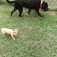 Advantage II Flea & Lice Treatment for Dogs uploaded by Erin F.
