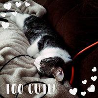 TEMPTATIONS™ Classic Treats For Cats Tasty Chicken Cat Treats uploaded by Brittanni B.