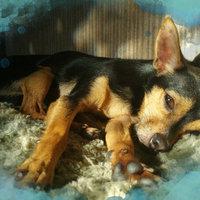 Bil-Jac Frozen Dog Food, 20 lbs, Case of 4 - 5 lb. bags uploaded by Gabriella C.