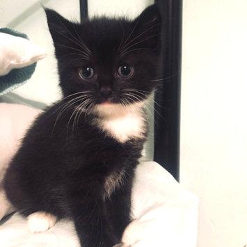 Photo of Iams™ Proactive Health™ Healthy Kitten Cat Food uploaded by Sophie's B.