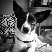 Pedigree® Small Dog Targeted Nutrition Steak & Vegetable Flavor Dry Dog Food uploaded by Melanie L.