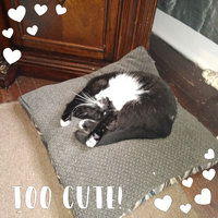 Pounce Moist Cat Treats uploaded by Cynthia L.