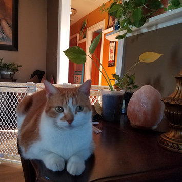 Photo uploaded to #FurryFriends by miriam R.