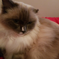 Friskies® Tasty Treasures with Turkey & Cheese in Gravy Cat Food uploaded by Jessica C.