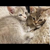 TEMPTATIONS™ Classic Treats For Cats Hearty Beef Cat Treats uploaded by Teysha B.