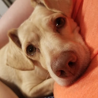 PURINA ONE® Smartblend True Instinct Adult Dog Food uploaded by Amber L.