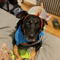 Turtleneck Sweater Pet Apparel Full Body Suit - Wondershop™ uploaded by Grace D.