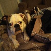 Greenies™ Pill Pockets™ Dog Treat uploaded by Robin F.