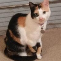 TEMPTATIONS™ Classic Treats For Cats Seafood Medley Cat Treats uploaded by Claudia T.