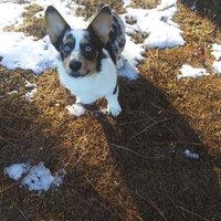 United Pet Group Mini Dingo Mini Bones Dog Treats uploaded by Megan W.