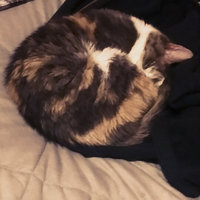 Purina Pro Plan FOCUS Sensitive Skin & Stomach Lamb & Rice Formula Adult Dry Cat Food - 3.5 lb. Bag uploaded by Sara S.