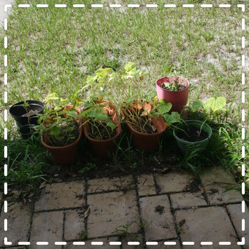 Photo uploaded to #GreenThumb by April L.