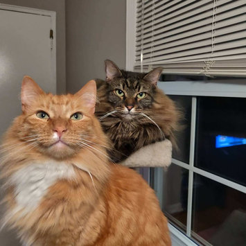 Photo uploaded to #CatLove by Gina A.