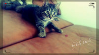 Whisker Lickins Tender Moments Soft & Delicious Cat Treats uploaded by Ela  D.
