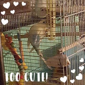 Photo uploaded to Sun Seed Kaytee Products Wild Bird Gold Spray Millet Treat by Hilda M.