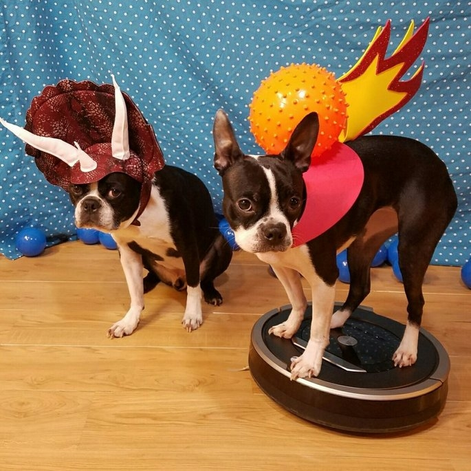 Rubies Triceratops Dog Costume - M uploaded by Crystal L.