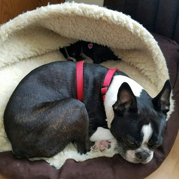 Snoozer Luxury Cozy Cave Pet Bed uploaded by Crystal L.