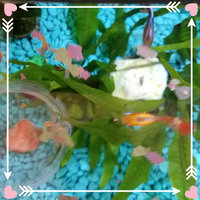 Tetra TetraMin Tropical Flakes uploaded by Sarah D.