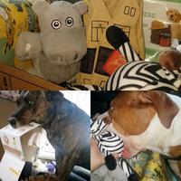 BarkBox uploaded by Angelica B.