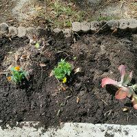 Poly-tex Poly-Tex HG8016G Snap & Grow 8x16 Greenhouse - Green uploaded by Ramonita R.