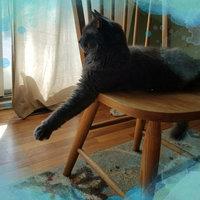 Arm & HammerA Clump & Seal Multi-Cat Litter uploaded by Kelsey S.