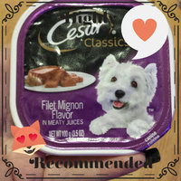 Cesar Canine Cuisine Filet Mignon Flavor uploaded by Bev M.
