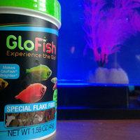 GloFish GLOAFish Special Flake Fish Food uploaded by Maci B.