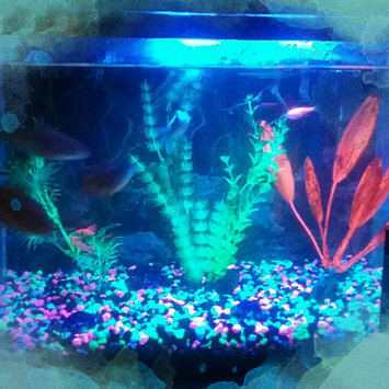 GloFish GLOAFish Starter Kit Aquarium uploaded by veronica f.