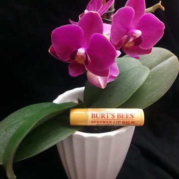 Burt's Bees® Beeswax Lip Balm uploaded by Isai H.